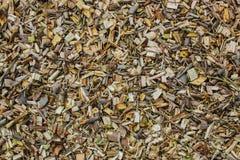 Zerrissene Baumaste und Büsche liegen aus den Grund Lizenzfreies Stockfoto
