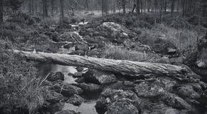 Zerschmetterter Baumstumpf und Fluss Stockfoto