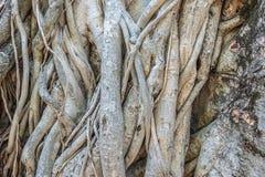 Zersplittern Sie die gebrochene Barke des alten bedeckten Baums Stockfotografie