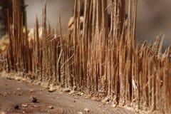 Zersplitterter Baum Lizenzfreies Stockfoto