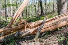 Zersplitterter Baum gefallen über Spur Lizenzfreies Stockbild