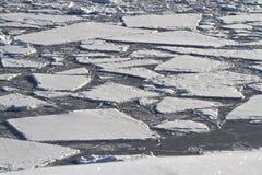 Zersplittertes Eisfeld in der Antarktis Stockbilder