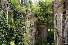 Zerstört durch den Krieg, überwältigt durch Bäume und Efeuruinen des Apartmenthauses Stockbilder