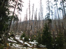 Zerstörte Bäume stockfotografie