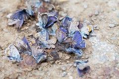 Zerstörte Schmetterlingsfamilie Stockbild