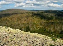 Zerstörter gezierter Wald Lizenzfreie Stockfotografie