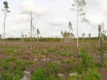 Zerstörter Wald Stockfotografie