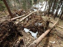 Zerstörter Wald als Effekt des starken Sturms stockfotos