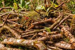 Zerstörung Yasuni-staatlichen Waldes lizenzfreies stockfoto