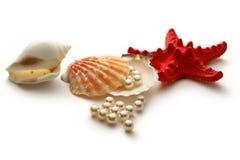 Weiße Perlen im Seashell lizenzfreie stockfotos