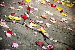 Zerstreuen des Blumenblattes Stockfotografie