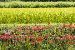 Zerstreute Blumen Lizenzfreies Stockfoto