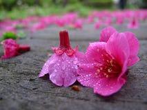 Zerstreute Blumen im Regen Stockfoto