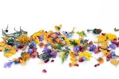 Zerstreute Blumen und Kräuter stockfotos