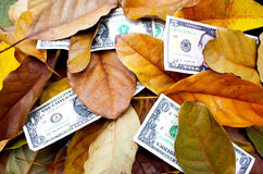 Zerstreute Dollarscheine unter gefallenem Autumn Leaves Stockbild