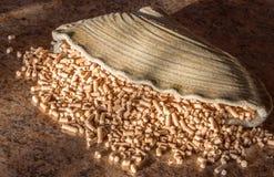 Zerstreute Fülle von Kiefernkugeln Stockfoto