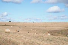 Zerstreute Heuballen auf einem trockenen Bauernhof lizenzfreie stockfotos
