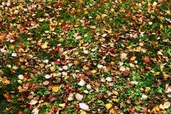 Zerstreuter Herbstlaub Lizenzfreie Stockfotos