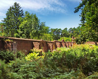 Zerzauster Garten Lizenzfreie Stockfotografie
