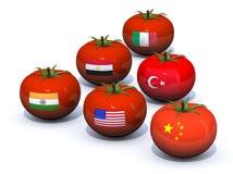 Zes concepten van Tomatenproducenten Stock Afbeeldingen