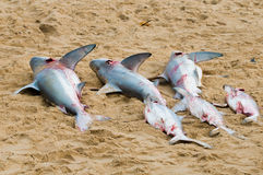 Zes dode haaien op strand royalty-vrije stock afbeelding