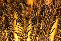 Zes droge takken (Polypodiophyta) van varen Stock Fotografie