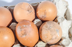 Zes Eieren Stock Foto