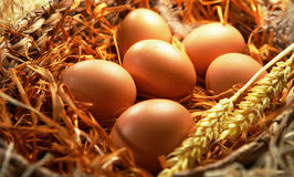 Zes gele eieren Stock Foto's