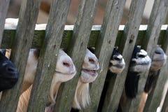 Zes glimlachen Stock Fotografie