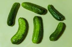 Zes groene komkommers op een lichte achtergrond Royalty-vrije Stock Afbeeldingen