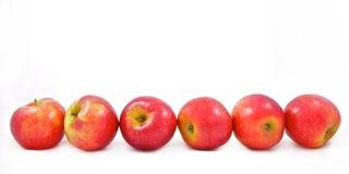 Zes rode appelen in een rij Stock Foto