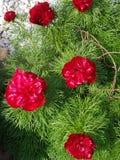 Zes Rode Bloemen royalty-vrije stock afbeeldingen