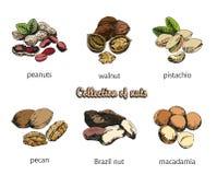 Zes soorten noten vector illustratie