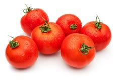 Zes tomaten royalty-vrije stock foto's