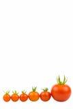 Zes Tomaten 2 Royalty-vrije Stock Foto's