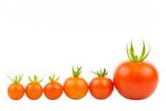 Zes Tomaten Stock Foto's