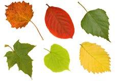 Zes verschillende bladeren op wit Royalty-vrije Stock Foto