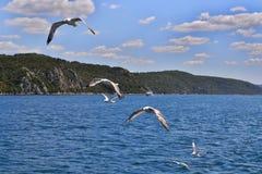 Zes zeemeeuwen met wijd uitgespreide vleugels vliegen boven het water royalty-vrije stock fotografie