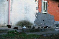zespołu kotów wczesny godzina target712_0_ Zdjęcia Stock