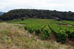 Zespołu winnica w Francja Obraz Royalty Free