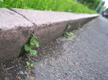 Zest to life (on the road). Plant growth trhough the kerb in the street Stock Images