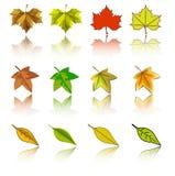 zestaw wektora liści jesienią ilustracja wektor