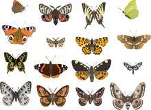 Zestien vlinders Royalty-vrije Stock Afbeelding
