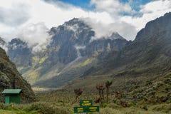 Zet Baker in het Rwenzori-Bergen Nationale Park op, Kasese-District, Oeganda stock afbeeldingen