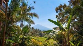 Zet Batukaru, Bali, Indonesië op Stock Afbeeldingen
