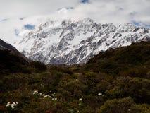 Zet Cook Lily /buttercup en MT Cook, Hooker Vallei, Nieuw Zeeland op Royalty-vrije Stock Foto