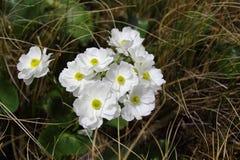 Zet Cook Lily, de Pas Nationaal Park van Arthur op Royalty-vrije Stock Foto