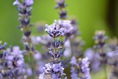 Zet de bloemen op uw achtergrondkleur uw het werkplaats Stock Foto's