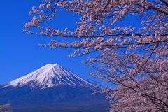 Zet de bloesems van Fuji en van de kers met Blauwe Hemel van de Stad Japan van Fuji Kawaguchiko op royalty-vrije stock afbeeldingen