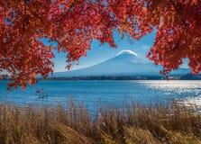 Zet de esdoornbladeren van Fuji en van de herfst, Kawaguchiko-meer, Japan op Stock Foto